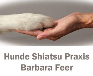 Hunde Shiatsu - Barbara Feer