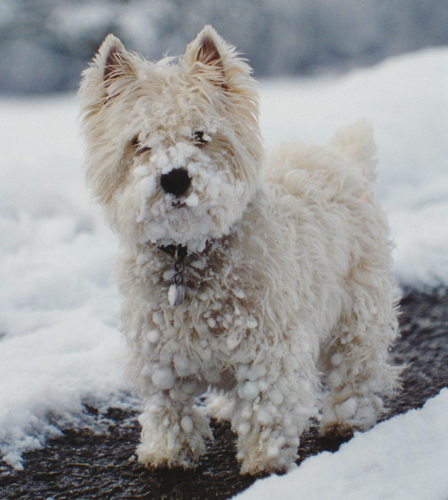 Jascha_Schnee